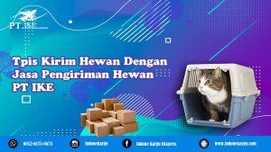 Tips Kirim Hewan Dengan Jasa Pengiriman Hewan di Medan