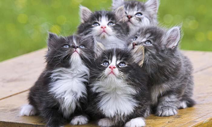jasa pengiriman kucing